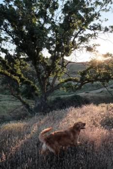 No person tree mammal nature #48194