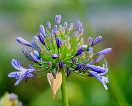 Green Yellow and Purple Cluster Petaled Flower Free Photo