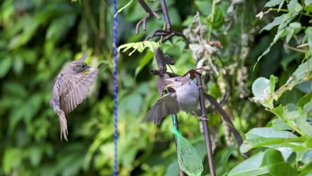 Gray Bird Flying during Daytime #48268