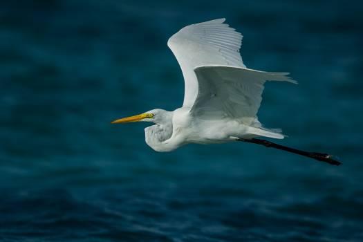 Bird flying water hobbledehoy Free Photo