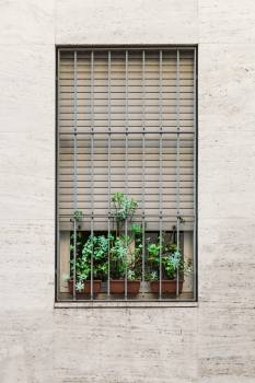 Window flowers decoration #48644
