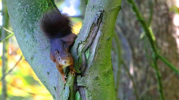 Brown Squirrel in Green Tree Trunk #48714