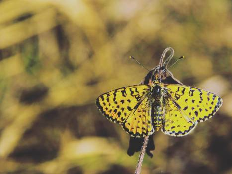 Yellow and Black Butterfly #48716