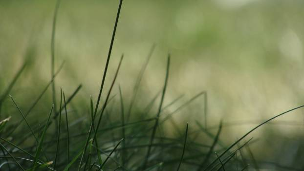 Grass blur ground green #48782