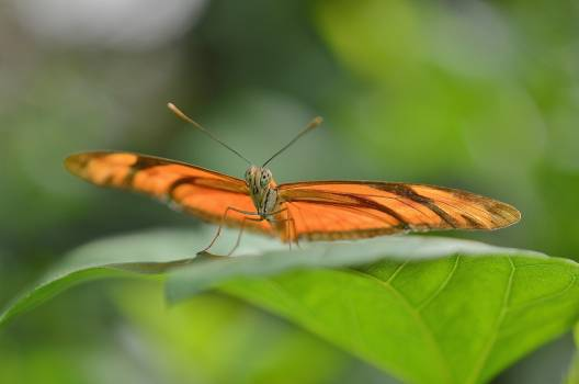 Brown Butterfly on Leaf in Macro Photography #48864