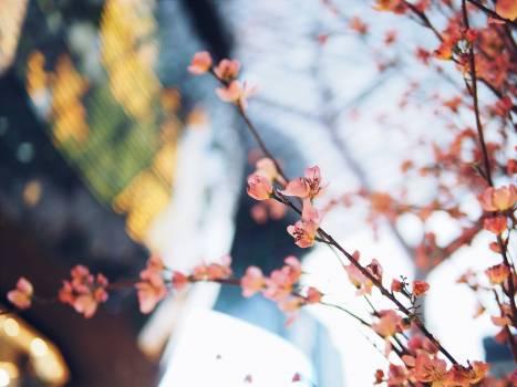 Pink Flowering Plant #48877