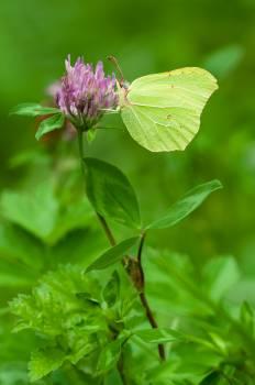 Green Butterfly #48883