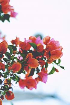 Closeup leaves flowers #48995