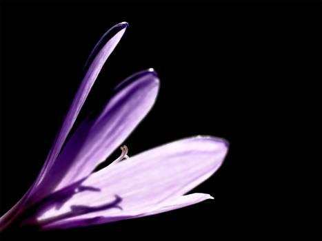 Purple Floer #49037