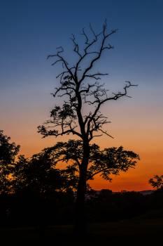 Wood light sunset lights #49059
