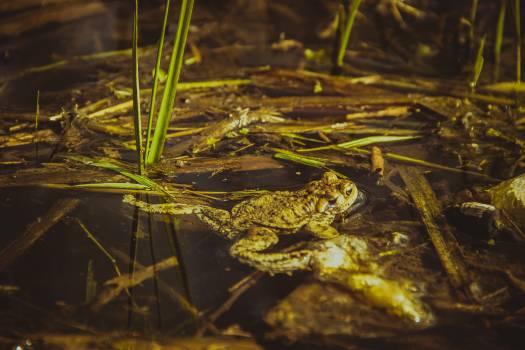 Brown Frog Beside Green Grass #49077