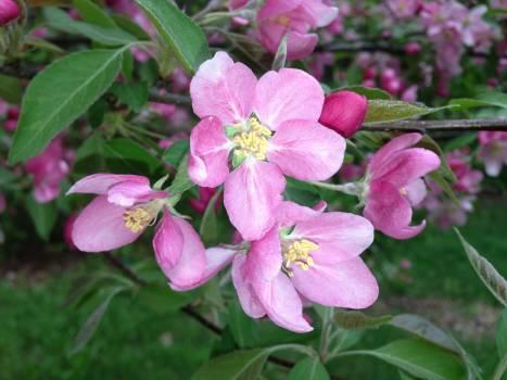 Pink Petal Flower #49162