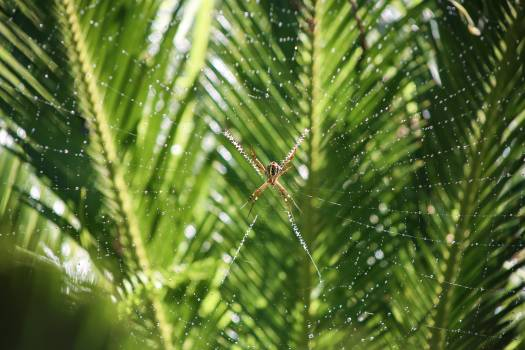 Spider web spider web zig zag Free Photo