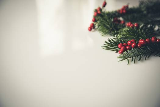 Christmas Holly Beside White Painting Concrete Wall Free Photo