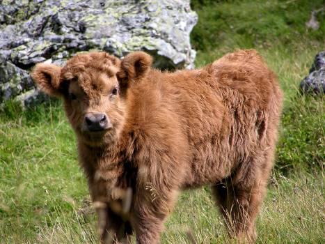 Brown Long Coat 4 Leg Animal on Green Grass during Daytime #49435