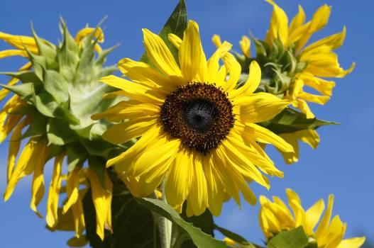 Yellow petals plants flora #49444