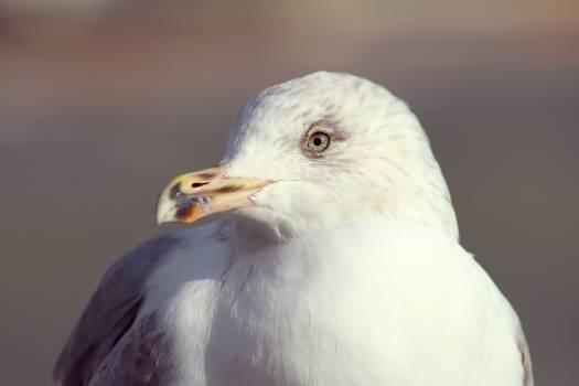 Macro Photo of White Bird during Daytime #49476