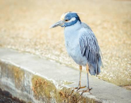 Bird blue beak feathers #49482