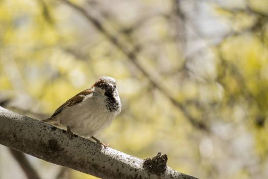 Brown and White Bird #49500