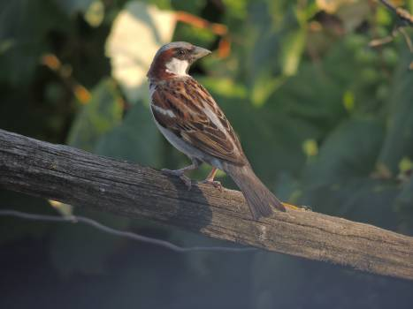 Brown and Gray Bird on Gray Wood Free Photo