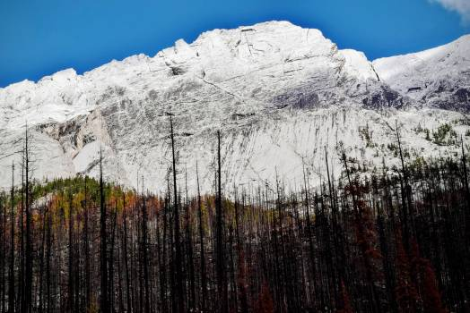 Trees Near Snow Covered Mountain during Daytime #49632