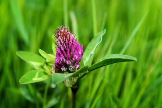 Purple Petal Flower on Green Grass #49752