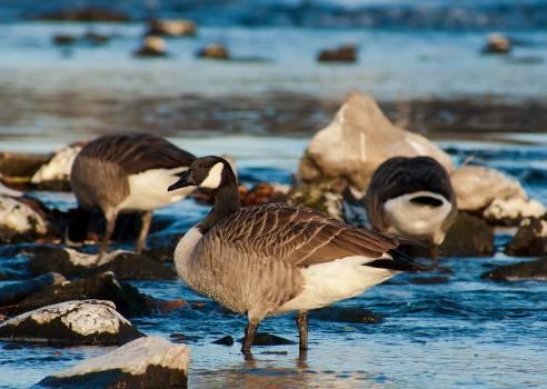 Nature water lake animals #49766