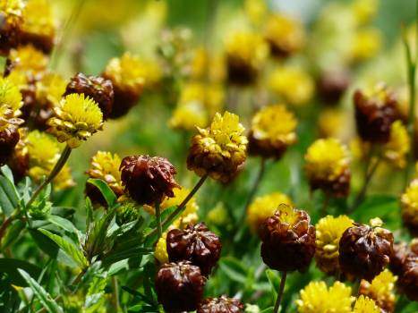 Brown and Yellow Cluster Petaled Flower Closed Up Photography #49780