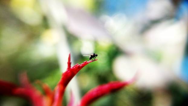 Black Insect on Red Plant Free Photo