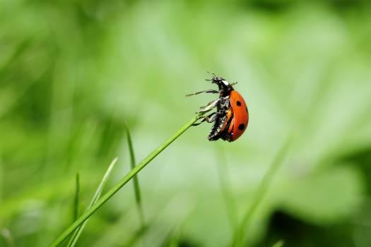 Orange Ladybug on Green Plant #49853