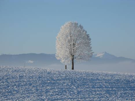 Lone Tree Surrounded by Snowcap Mountain Under Blue Sky #49887