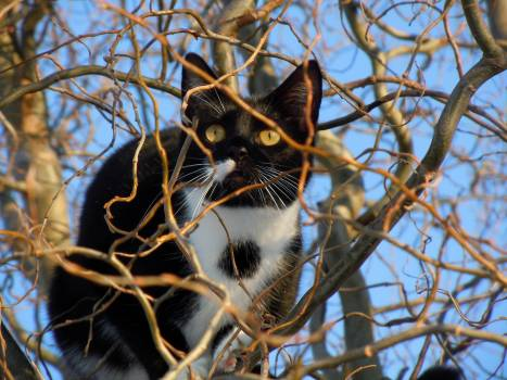 Black and White Cat in a Tree #49891