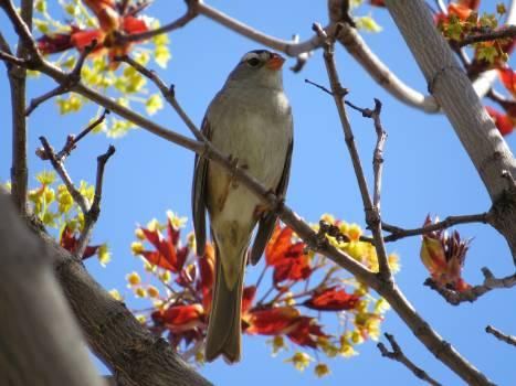 Bulbul Nightingale Thrush #49961