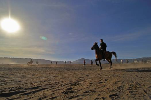 Horse rider in bromo mountain #50023