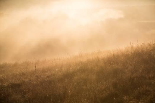 Field Landscape Grass #50466