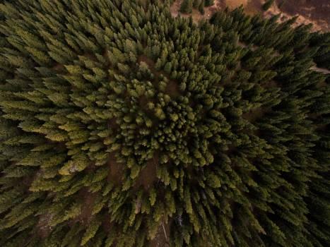 Sea urchin Porcupine Echinoderm #50473