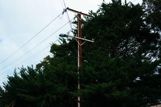 Brown Electric Post Near Tree Free Photo