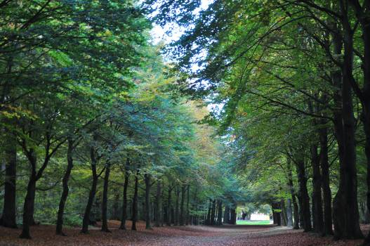 Autumn fall forest Free Photo
