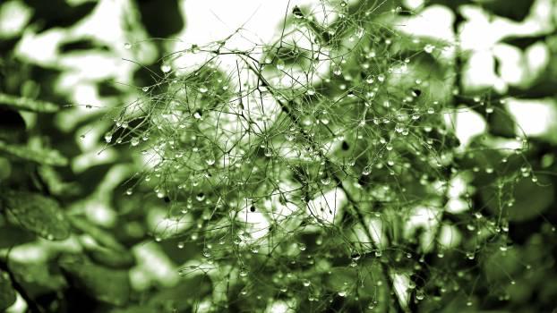 Green Leaf Plant With Dew #51111