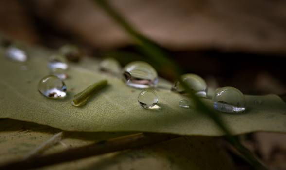 Drop of Water on Green Leaf Plant Free Photo