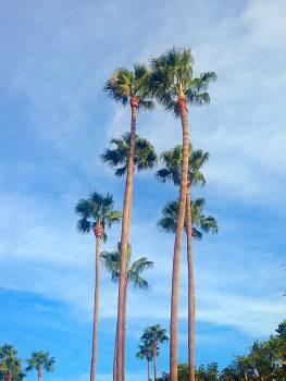 La beauty nature palm trees Free Photo
