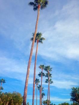 Nature palm tree #51348