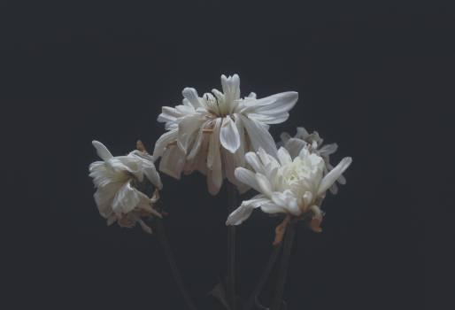Black close dark floral Free Photo