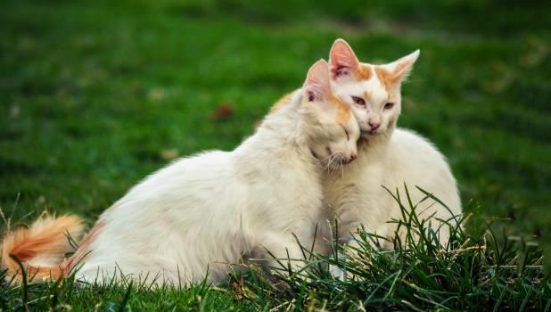 Cats grass green love #51614