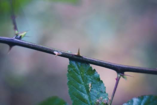 Branch incite mothernature natural #51663