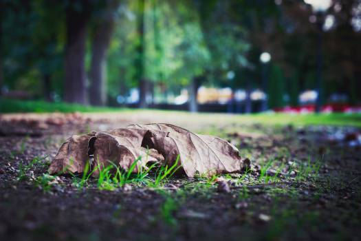 Selective Photo of Dry Leaf on Ground Free Photo