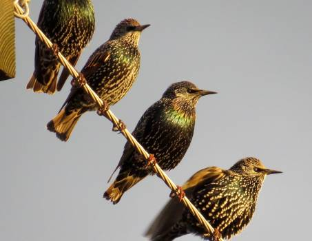 Hummingbird Bird House finch Free Photo