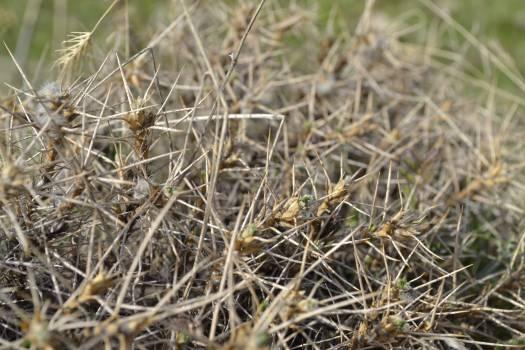 Grass Plant Stalk Free Photo