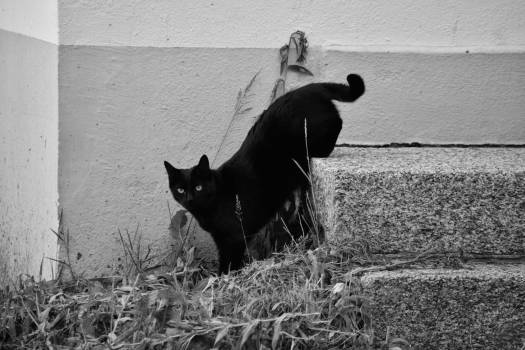 Animal domestique animalier escaliers felin #51911