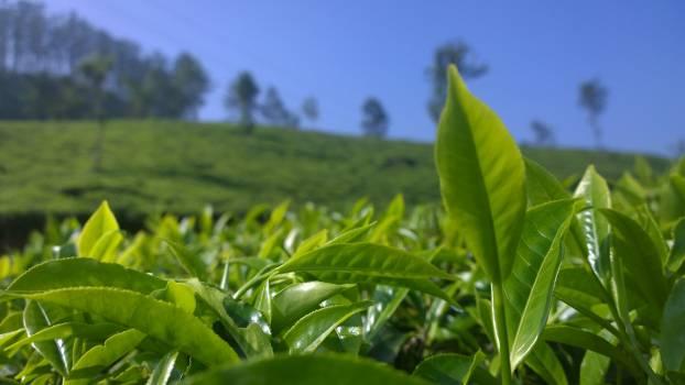 Greenery india kerala plantation #51925